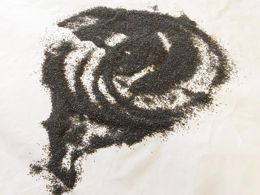 Campagna bacologica: dal seme bachi all'allevamento